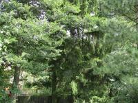Ve spodní části zahrady jsou krásné vzrostlé stromy (Prodej domu v osobním vlastnictví 260 m², Nečtiny)
