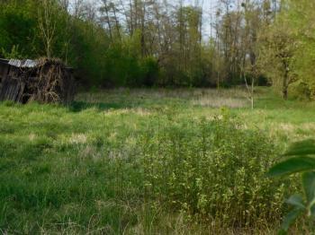 Prodej pozemku, 1577 m2, Dub nad Moravou