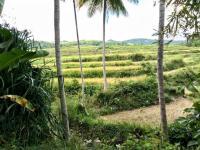 Prodej pozemku, 15000 m2, Sumba Barat