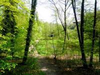 cesta k řece (Prodej chaty / chalupy 20 m², Týnec nad Labem)