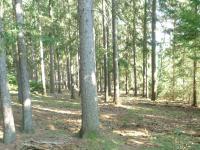 Prodej pozemku 13538 m², Úboč