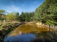 rybník před lesíkem (Prodej domu v osobním vlastnictví 140 m², Šanov)