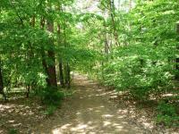 Příjezdová cesta vede lesem. (Prodej domu v osobním vlastnictví 90 m², Vráž)