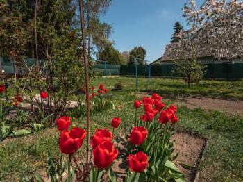 pohled do zahrady - Prodej domu v osobním vlastnictví 207 m², Ondřejov