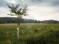 Prodej pozemku 7600 m², Číměř