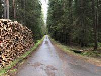 udržované lesy a lesní asfaltové cesty v okolí - Prodej penzionu 750 m², Staňkov