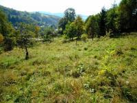 Prodej pozemku 4941 m², Zlatá Olešnice