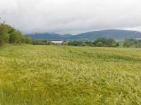foto 7 - pozemek (Prodej pozemku 16250 m², Dílce)