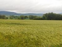 foto 6 - pozemek (Prodej pozemku 16250 m², Dílce)