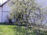 Prodej chaty / chalupy 35 m², Orlovice