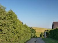 Přístupová cesta - Prodej chaty / chalupy 36 m², Bohdalice-Pavlovice