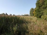 Pohled na pozemek (Prodej pozemku 24549 m², Starý Kolín)