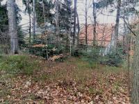 Lesík u domu (Prodej chaty / chalupy 160 m², Trojanovice)
