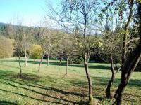 Ovocné stromy - švestka, ořech (Prodej chaty / chalupy 134 m², Staré Hamry)