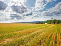 Prodej pozemku 3529 m², Bušovice