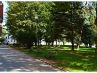Zeleň před domem (Pronájem bytu 1+1 v osobním vlastnictví 35 m², Brno)