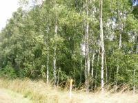 na pozemku jsou vzrostlé stromy a náletové křoviny (Prodej pozemku 9667 m², Pertoltice pod Ralskem)