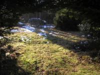 Zahrada (Prodej chaty / chalupy 20 m², Mikulovice)