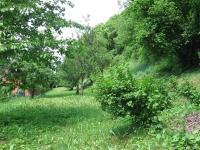 Prodej pozemku 2876 m², Olšany