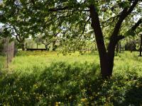 Menší zahrada (Prodej chaty / chalupy 77 m², Sedlice)