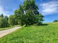 Prodej pozemku 9725 m², Borová Lada