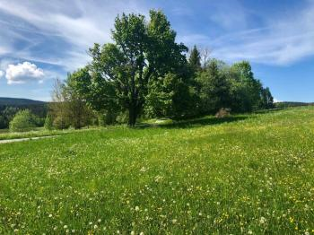 Pozemek lemuje místní komunikaci - Prodej pozemku 9725 m², Borová Lada