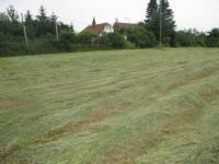 Prodej pozemku 4153 m², Sedlice
