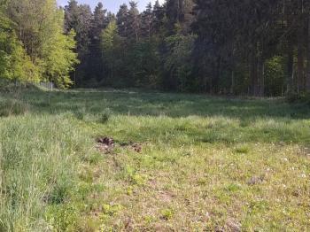 Prodej pozemku 4223 m², Včelná