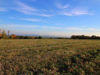 Prodej pozemku 12247 m², Klimkovice