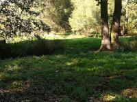 Prodej pozemku 14643 m², Stará Huť
