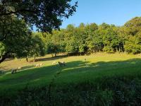 V okolí pastviny a lesy (Prodej pozemku 425 m², Krupka)