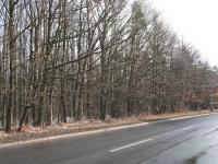 Hostivařský lesopark cca 200m od domu (Prodej bytu 2+kk v osobním vlastnictví 43 m², Praha 4 - Háje)