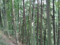 Prodej pozemku 16789 m², Bělá u Jevíčka