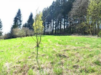 pohled na pozemek s lesem - Prodej pozemku 2778 m², Česká Třebová
