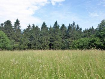 Prodej pozemku 928 m², Rybník