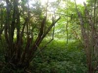 Prodej pozemku 3729 m², Vimperk