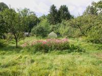 zahrada - Prodej domu v osobním vlastnictví 424 m², Trhové Sviny
