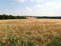 Prodej pozemku 31675 m², Sibřina