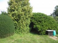 vzrostlé okrasné dřeviny a keře na pozemku  (Prodej chaty / chalupy 40 m², Choltice)