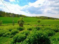 Zahrada - Prodej domu v osobním vlastnictví 300 m², Kuks