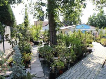 pohled od vstupu - Pronájem pozemku 835 m², Praha 9 - Klánovice