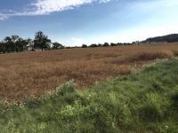Prodej pozemku 5063 m², Výčapy