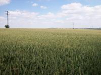 Prodej pozemku 2000 m², Průhonice