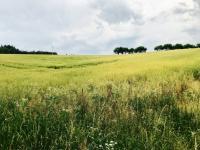Prodej pozemku 1251 m², Kozlany