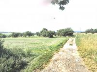 Prodej pozemku 5000 m², Šatov