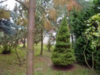 Zahrada (Prodej komerčního objektu 2330 m², Jesenec)