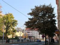 ulice - vstup (Pronájem obchodních prostor 120 m², Olomouc)