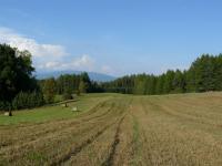 Prodej pozemku 6866 m², Borovnička