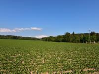 Prodej pozemku 5000 m², Dolany