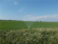Prodej pozemku 2735 m², Viničné Šumice